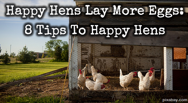 Happy Hens Lay More Eggs: 8 Tips to Happy Hens | Survivopedia