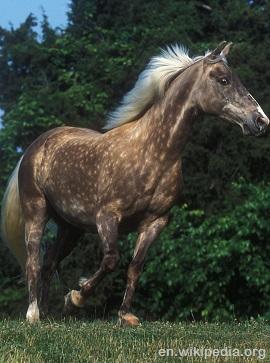 Rocky Mountaain Silverhorse