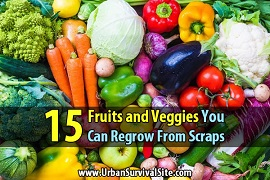 regrow veggies