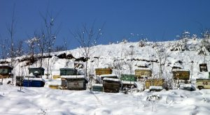 7 Tips On Getting Your Honeybees Ready For Winter