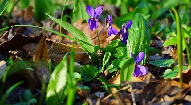 spring edible