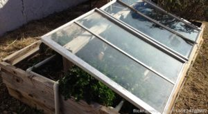 Survival Garden: DIY Cold Frames