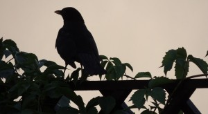 6 Wild Birds You Should Attract To Your Homestead