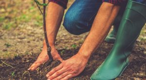 10 Trees That Any Prepper Should Grow