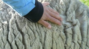 What You Need To Know About Using Wool For Survival