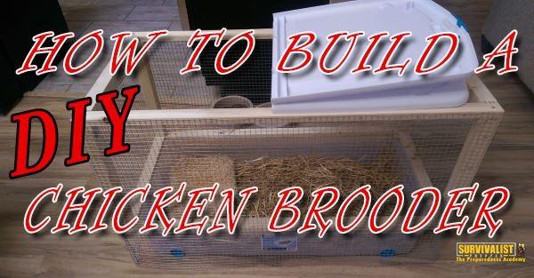 How-to-Make-a-Homemade-DIY-Chicken-Brooder-Cheap_1