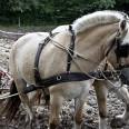 horses-82801_640