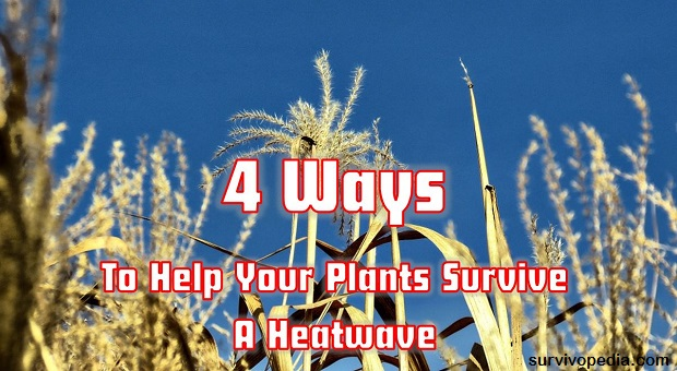 Survivopedia plants and heatwave