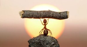 8357501 - statue of labour, ants civilization living 150 million years because of working