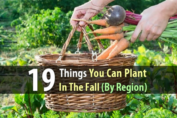 19-things-you-can-plant-in-the-fall-by-region-wide-1
