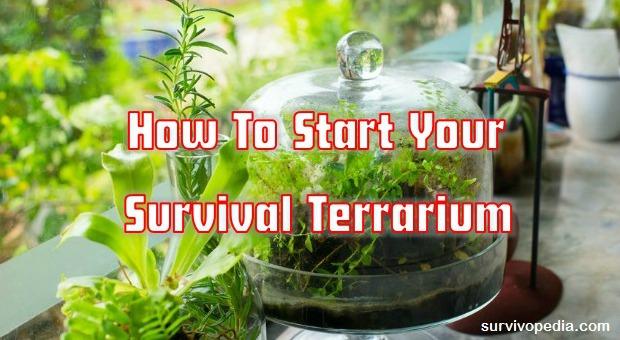 Survival terrarium