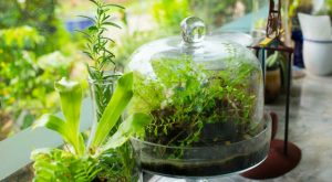 How To Start Your Survival Terrarium