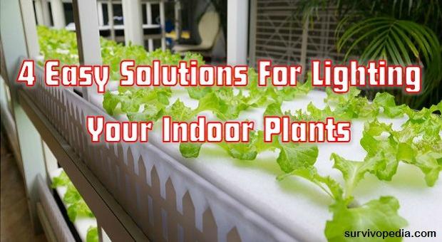 survivopedia-4-easy-solutions-for-lighting-your-indoor-plants