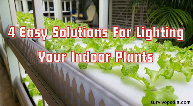 Lighting Your Indoor Plants