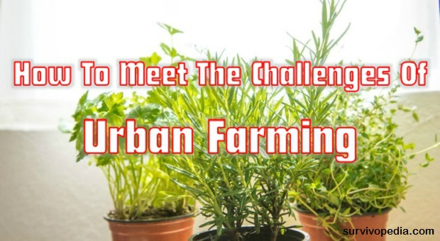 survivopedia-how-to-meet-the-challenges-of-urban-farming1