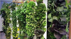 Why Vertical Gardening Is The Way To Go For Survival