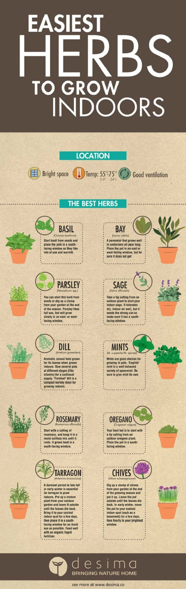 Indoor Herbs