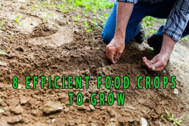 Eight-Efficient-Food-Crops-to-grow