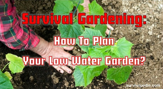 survivopedia-survival-gardening-how-to-plan-your-low-water-garden