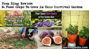 Prep Blog Review: 8+ Food Crops To Grow In Your Survival Garden