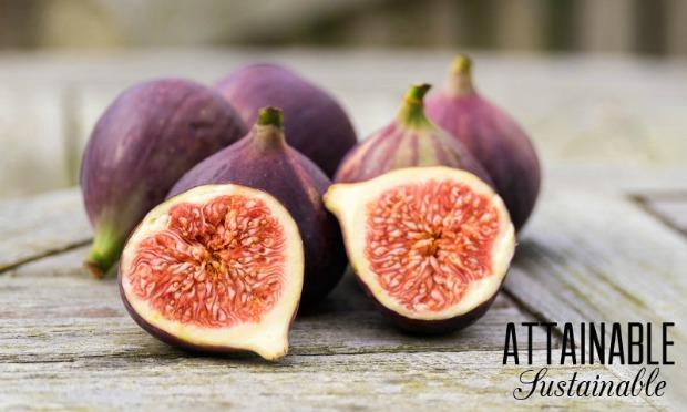 figs-purple