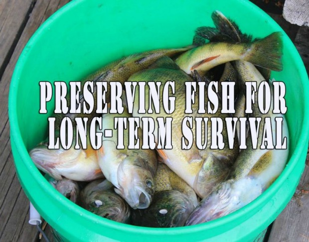 Preserving-fish-for-long-term-survival