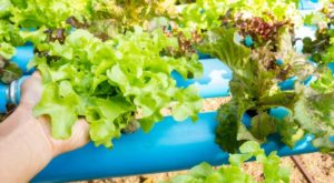 Start Growing Your Own Food Using Hydroponics