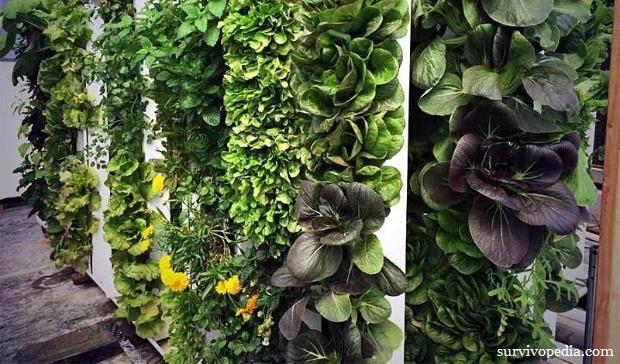 Vertical crops