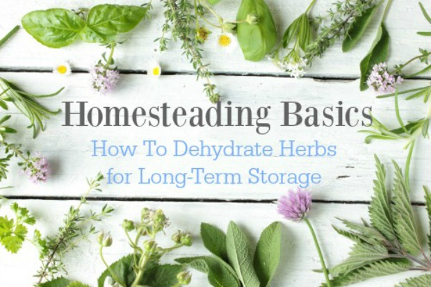 dehydrating-herbs-for-storage