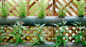 Why Vertical Gardening Works for Preppers