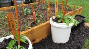 14 Best Vegetables To Grow In A Bucket