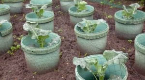 Best Ideas On Growing A Garden In 5 Gallon Buckets