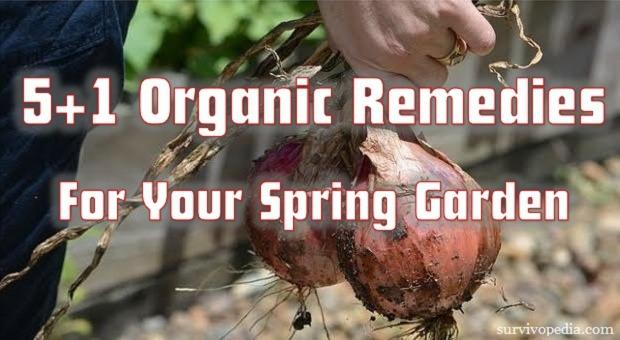 Organic_Remedies_Garden