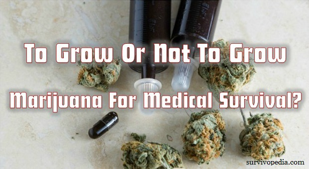 To Grow Or Not To Grow Marijuana For Medical Survival?