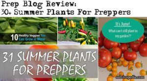 Prep Blog Review: 30+ Summer Plants For Preppers