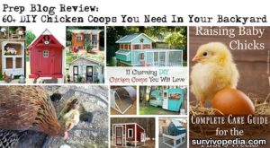 Prep Blog Review: 60+ DIY Chicken Coops You Need In Your Backyard