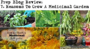 Prep Blog Review: 7+ Reasons To Grow A Medicinal Garden