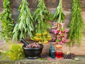 medicinal-herb-garden-600x450-300x225.jpg