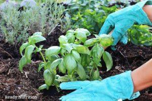 planting-an-herb-garden-300x200.jpg