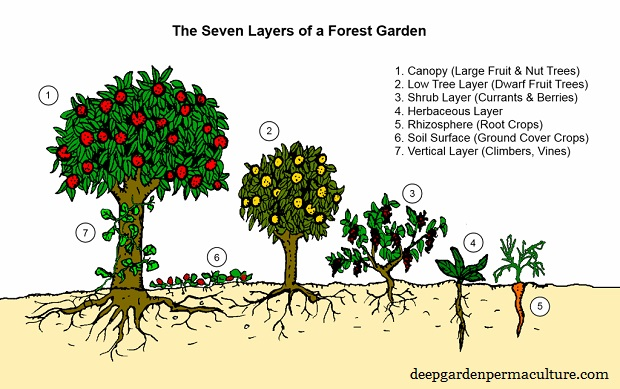 09-the-seven-layers-of-a-forest-garden.jpg