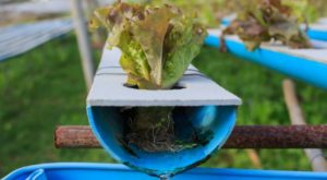 Growing Food: What to Use Instead of Soil