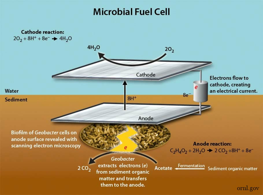 Microbial_Fuel_Cell_or.jpg