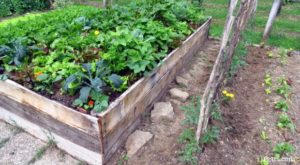 SVP_Why_To_Use_Permaculture_For_Survival-300x165.jpg
