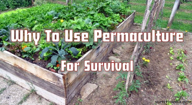 Survivopedia_Why_To_Use_Permaculture_For_Survival