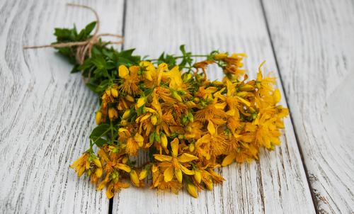 Fall Medicinal Wild Flowers