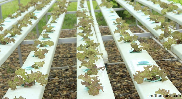 Nasty Truth: Aquaponics vs  Traditional Farming | Survivopedia