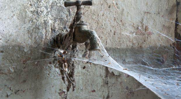 spiders silk
